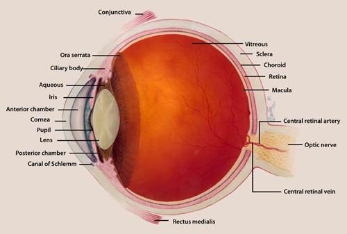 Uveal Coloboma Portland Eye Care Optometrist