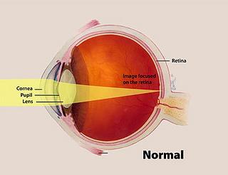 normal eye anatomy